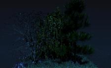 деревья 6