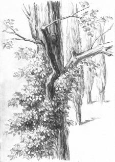 Рисунок, карандаш