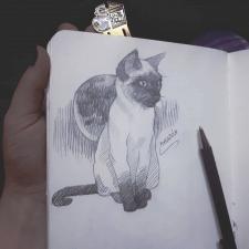 Скетч кота