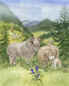 овцы в горах