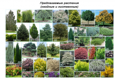 Проектные растения. Солнечногорск