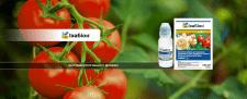 Заставки с препаратами на страницу сайта
