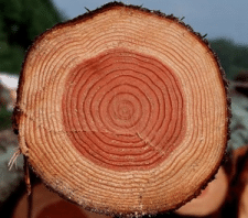 Теплопроводность различных пород древесины