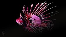 иллюстрация рыбы