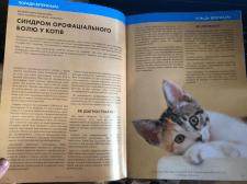 Синдром орофасціального болю у кішок