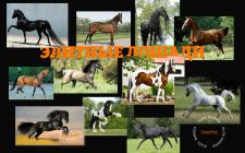 Главный экран лендинга для конюшни элитных лошадей
