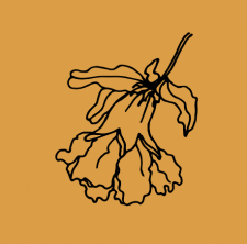цветущие плоды граната