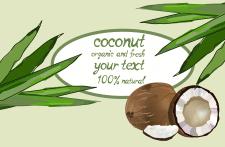 кокос продукция