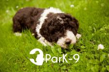 Логотип для скрининг-теста на болезнь Паркинсона
