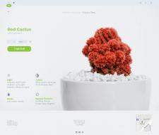 Интернет магазин по продаже кактусов