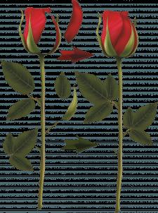 Красивая роза в CorelDRAW к дню 8 марта