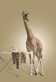 Раздетый жираф