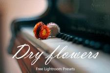 Dry Flowers Lightroom Presets