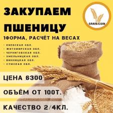 Логотип и контент для сайта