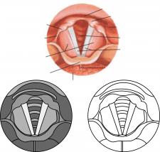 Векторное изображение гортани для госбольницы