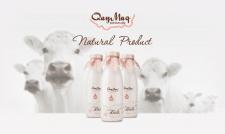 Brandbook для молочной продукции QayMaq