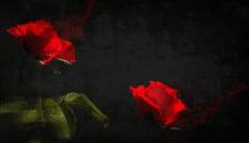 Красный запах