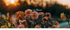 Bears and Flowers