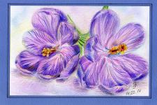 Цветы акварельный карандаш Крокусы