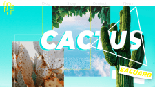 Блог о кактусах
