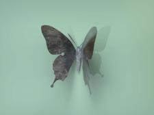 Крючочек бабочка