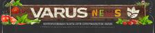 Дизайн шапки для газеты сети супермаркетов Varus