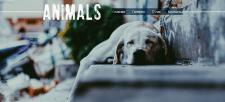 Главная страница сайта про животных