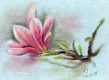 Цветы пастель магнолия