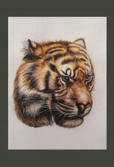 Тигр.Графика.
