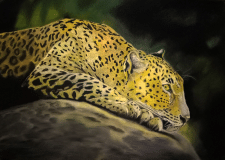 леопард, пастель