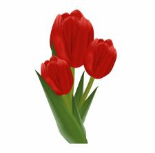 Букет тюльпани