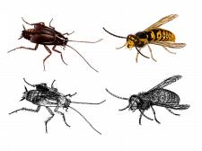 Отрисовка насекомых сетчатым градиентом