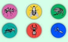 Иллюстрации насекомых