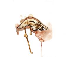 Акварельная иллюстрация- крыло
