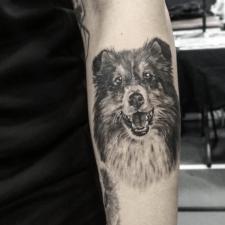 Тату пес tattoo dog
