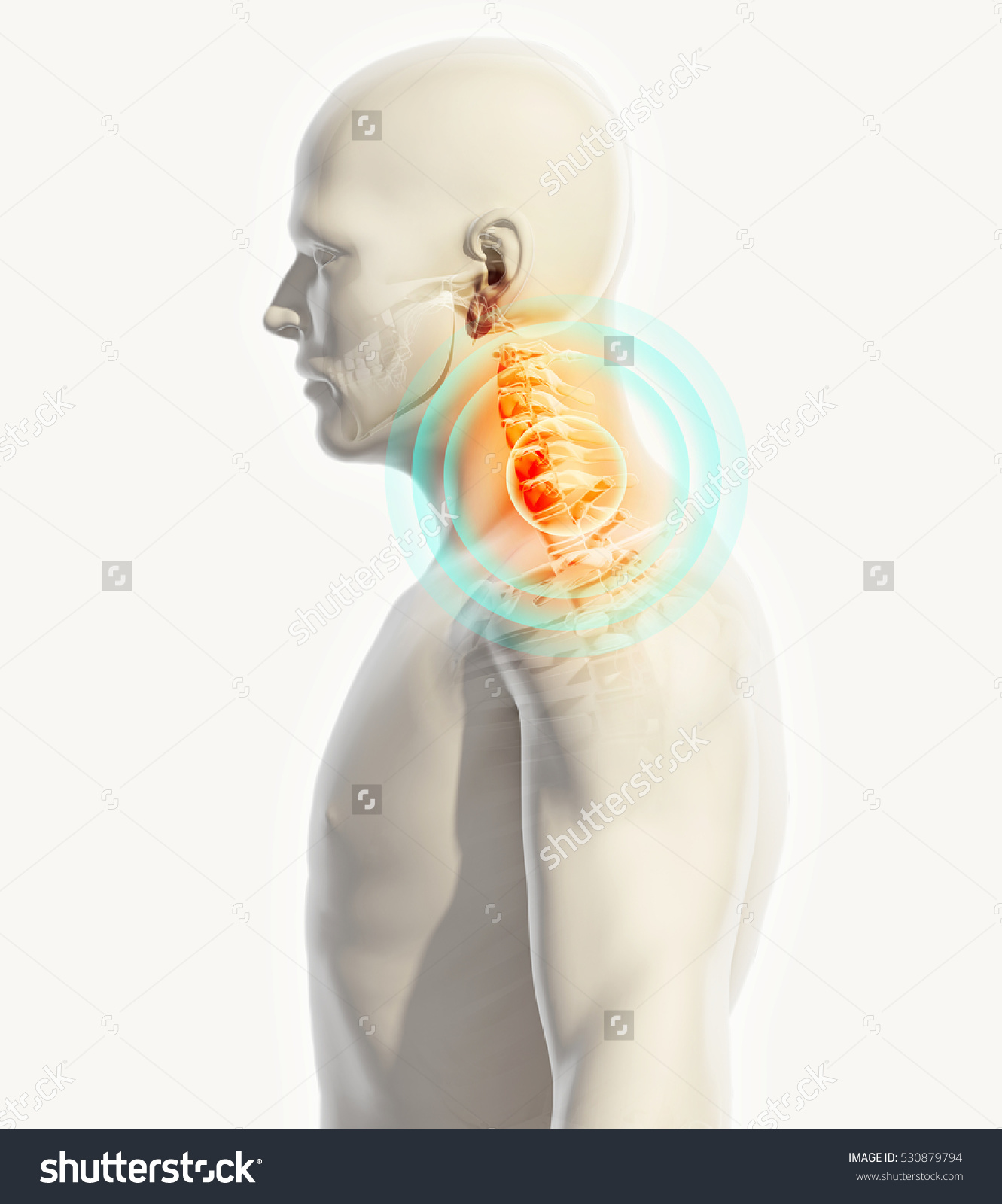 stock-photo--d-illustration-neck-painful-cervica-spine-skeleton-x-ray-medical-concept-530879794.jpg