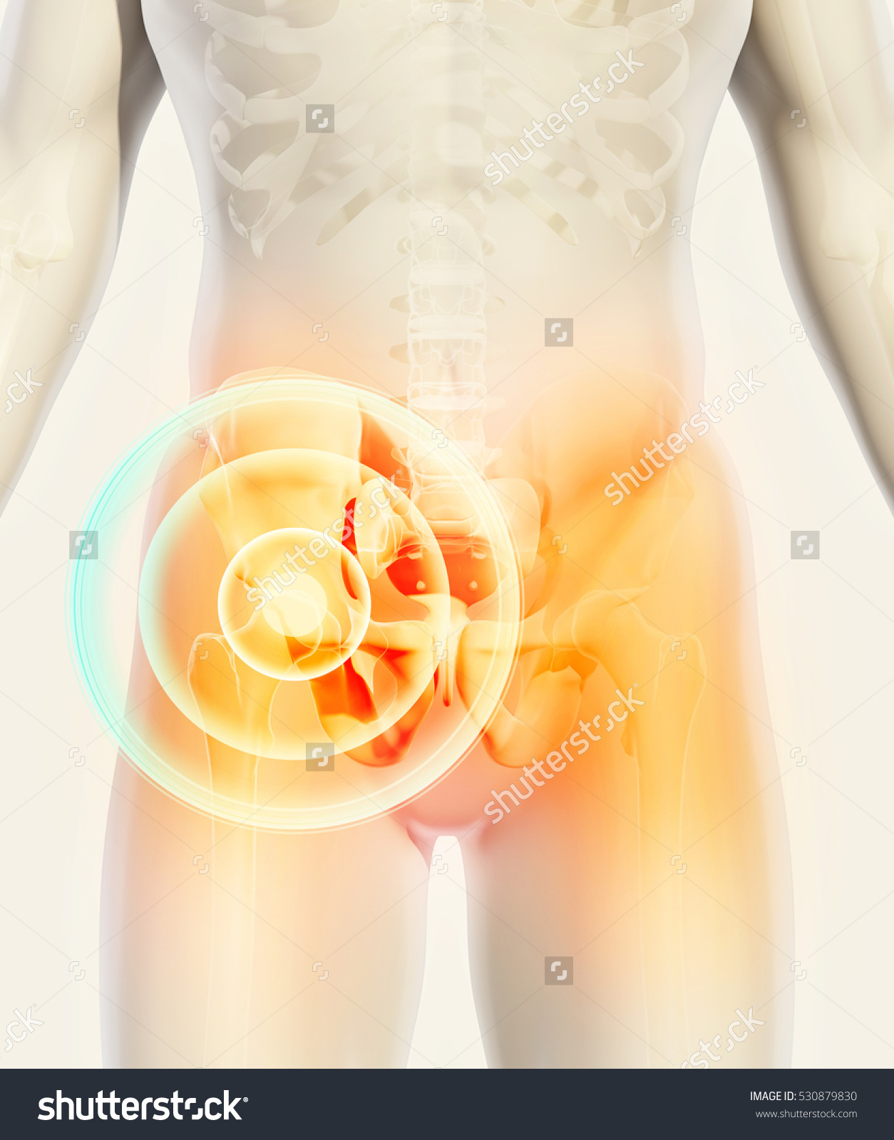 stock-photo--d-illustration-hip-painful-skeleton-x-ray-medical-concept-530879830.jpg