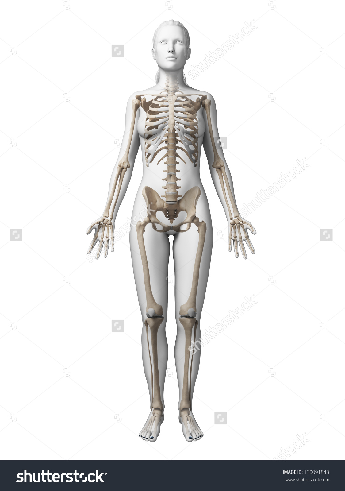 stock-photo--d-rendered-illustration-of-the-female-skeleton-130091843.jpg